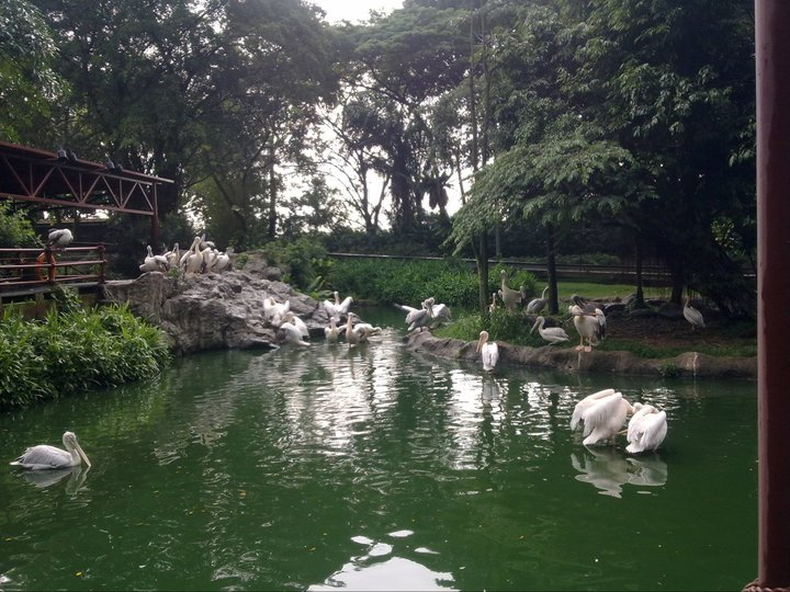 in Jurong Bird Park