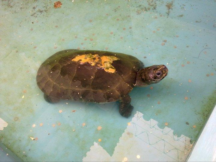 The Fortune Turtle