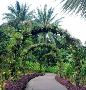 Singapore Botanic Gardens Vs Gardens By The Bay Wihardja