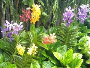 Flowers in the botanic gardens