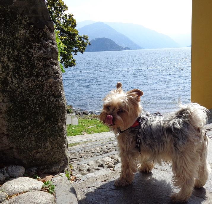 BEI that's enjoying the lake