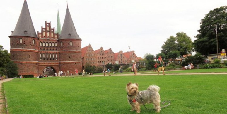 at Holstentor
