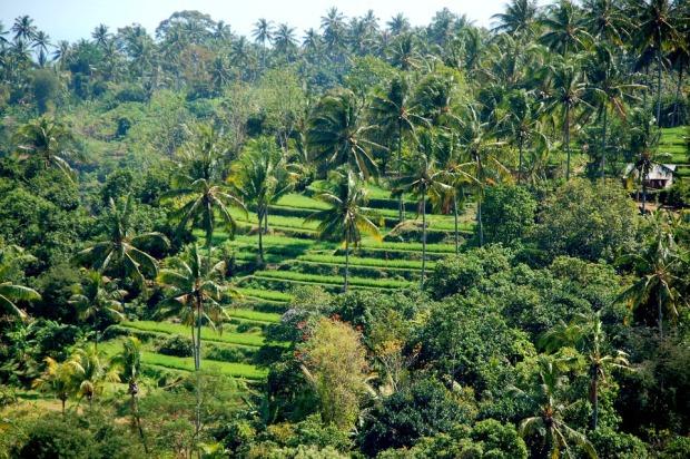 rice-fields-241220_960_720